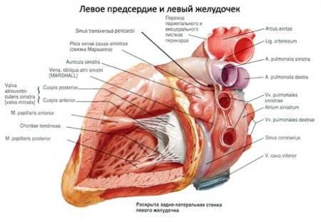 diéta a magas vérnyomás kezdetekor narzan fürdők magas vérnyomás ellen