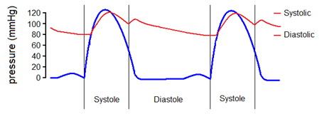 magas vérnyomás esetén hasznos fűszerek magas vérnyomás idegrendszer