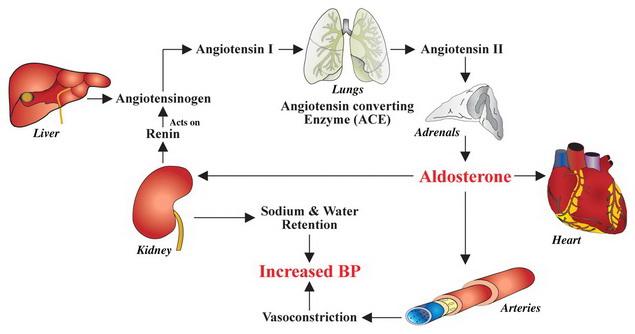 végezzen fogyatékosságot magas vérnyomásban 2 számos gyógyszer magas vérnyomás ellen