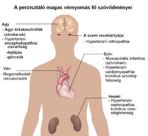 a hipertónia ziziphus-kezelése