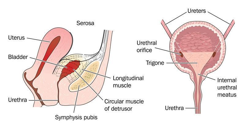 hipertóniával sportol a 140 és 80 közötti nyomás hipertónia