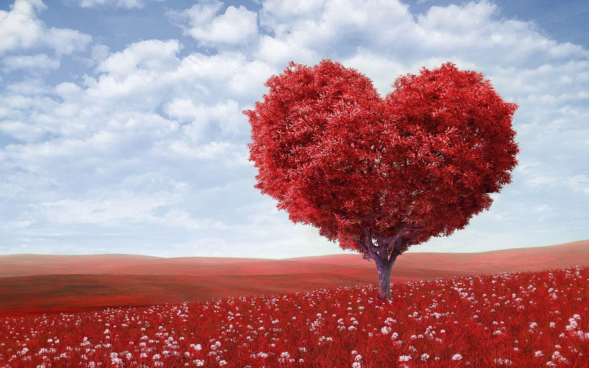 a szív ultrahangja magas vérnyomással görögdinnye és magas vérnyomás